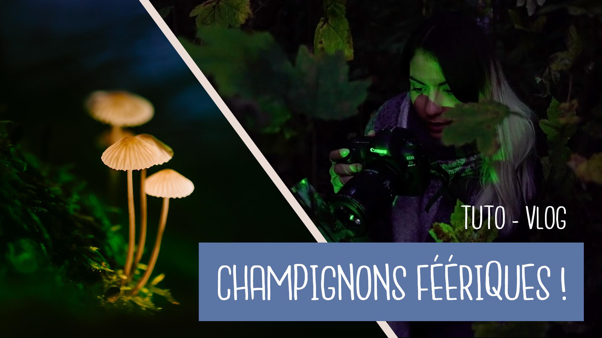 champignons féériques lumineux
