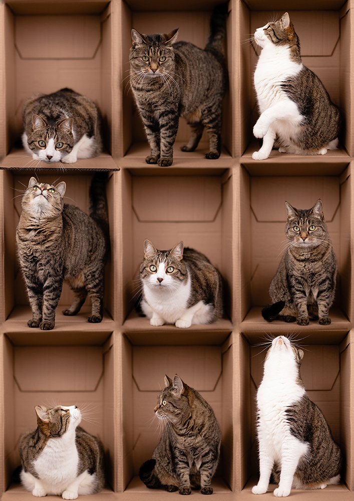 photographe chat cartons Nantes