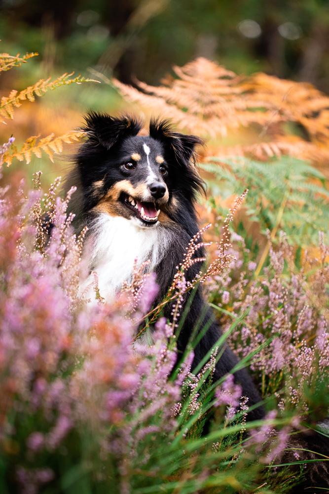 photographe canin chien loire atlantique Nantes
