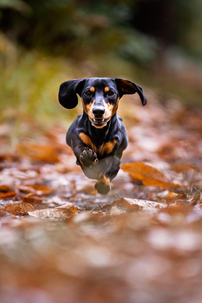 photographe canin chien Nantes