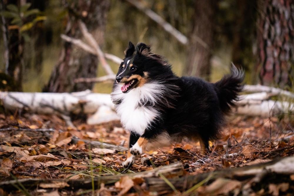séance photo canine forêt