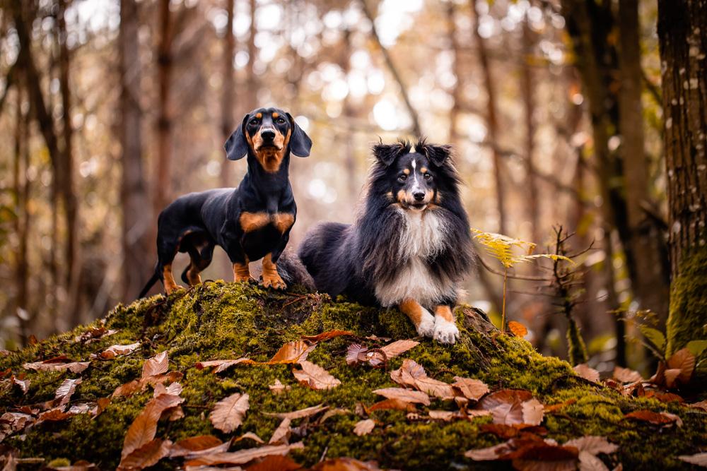 photographe canin Nantes