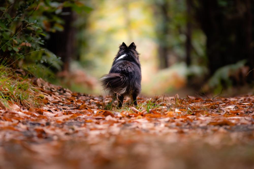 séance photo canine chien forêt