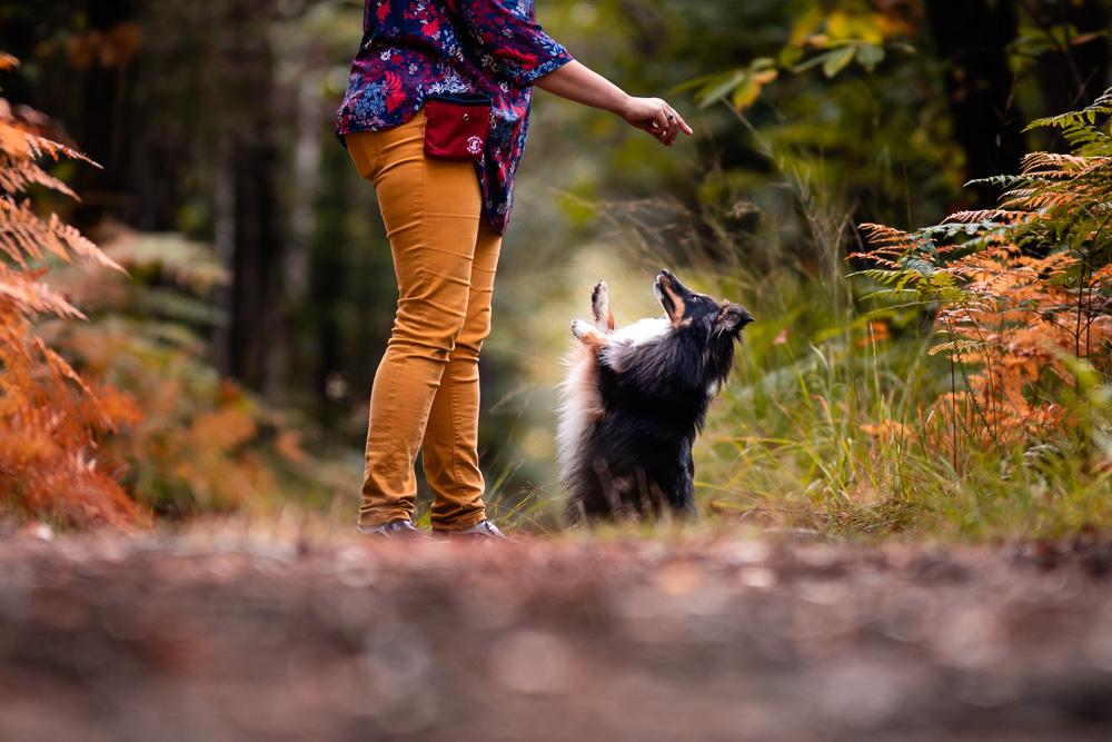 Séance photo canine en forêt